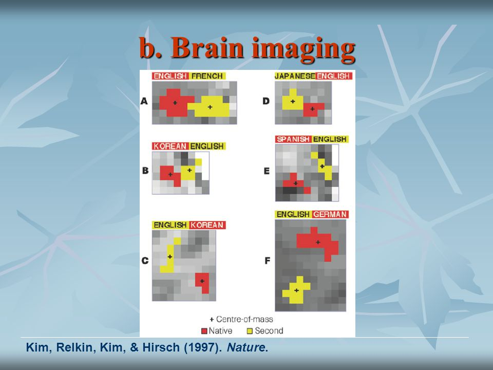 b. Brain imaging Kim, Relkin, Kim, & Hirsch (1997). Nature.