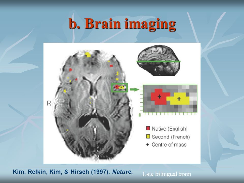 b. Brain imaging Kim, Relkin, Kim, & Hirsch (1997). Nature. Late bilingual brain