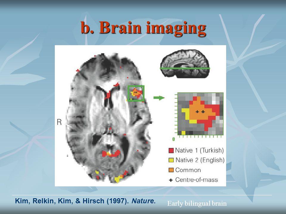 b. Brain imaging Kim, Relkin, Kim, & Hirsch (1997). Nature. Early bilingual brain