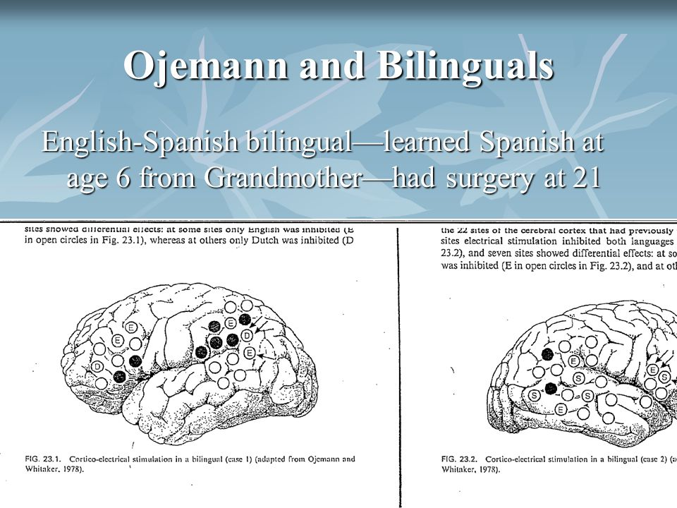 Ojemann and Bilinguals English-Spanish bilingual—learned Spanish at age 6 from Grandmother—had surgery at 21