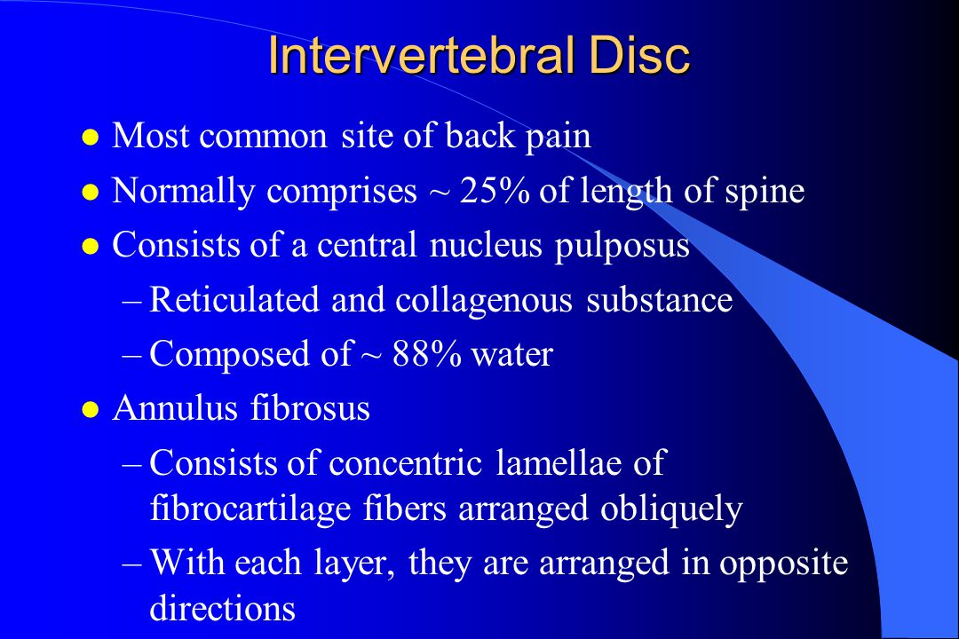Intervertebral Disc l Most common site of back pain l Normally comprises ~ 25% of length of spine l Consists of a central nucleus pulposus –Reticulated and collagenous substance –Composed of ~ 88% water l Annulus fibrosus –Consists of concentric lamellae of fibrocartilage fibers arranged obliquely –With each layer, they are arranged in opposite directions