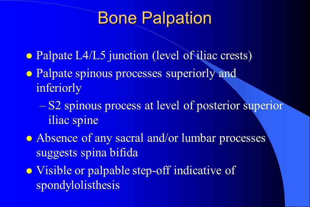 Bone Palpation l Palpate L4/L5 junction (level of iliac crests) l Palpate spinous processes superiorly and inferiorly –S2 spinous process at level of