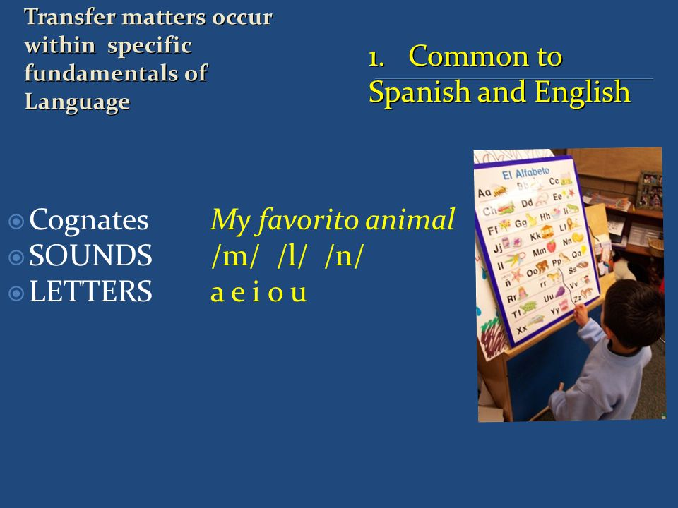 1. Common to Spanish and English  Cognates My favorito animal  SOUNDS /m/ /l/ /n/  LETTERS a e i o u Transfer matters occur within specific fundame