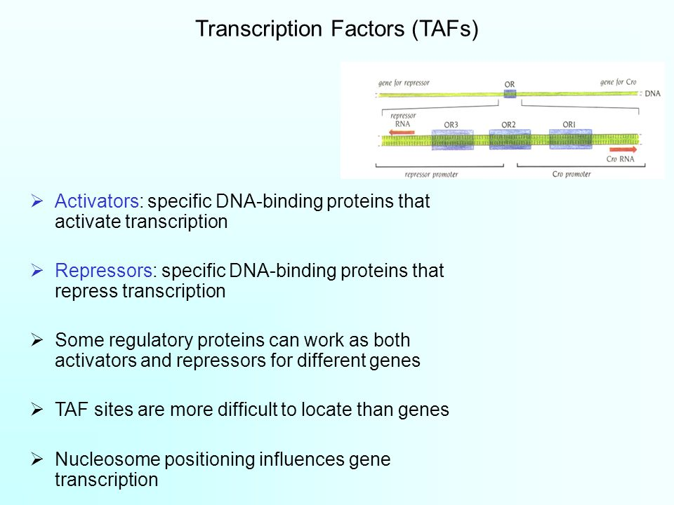  Activators: specific DNA-binding proteins that activate transcription  Repressors: specific DNA-binding proteins that repress transcription  Some regulatory proteins can work as both activators and repressors for different genes  TAF sites are more difficult to locate than genes  Nucleosome positioning influences gene transcription Transcription Factors (TAFs)