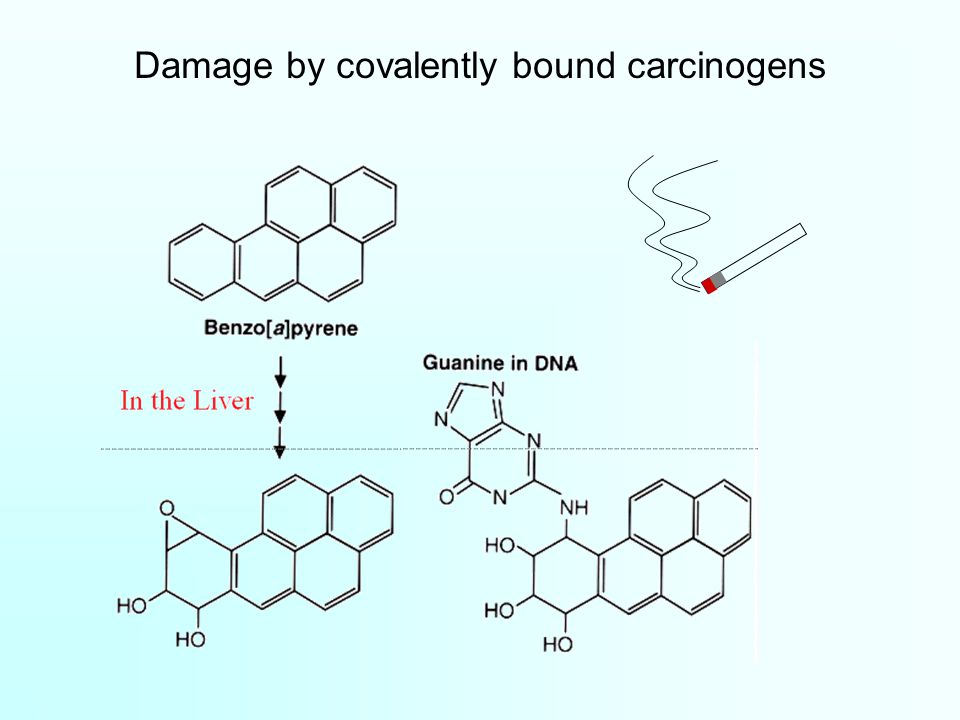 Damage by covalently bound carcinogens