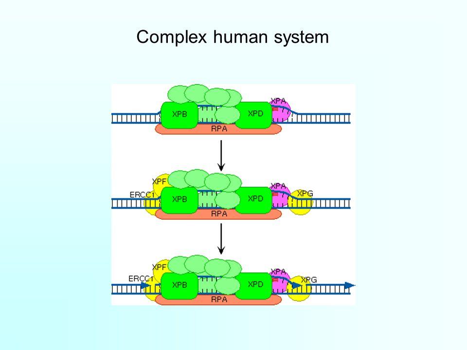 Complex human system