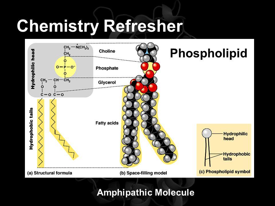 Chemistry Refresher Amphipathic Molecule Phospholipid