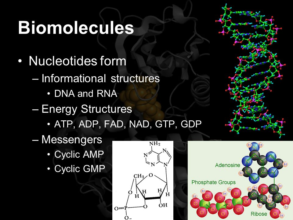 Biomolecules Nucleotides form –Informational structures DNA and RNA –Energy Structures ATP, ADP, FAD, NAD, GTP, GDP –Messengers Cyclic AMP Cyclic GMP