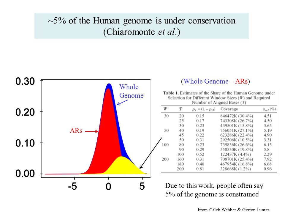 ARs Whole Genome (Whole Genome – ARs) Due to this work, people often say 5% of the genome is constrained ~5% of the Human genome is under conservation