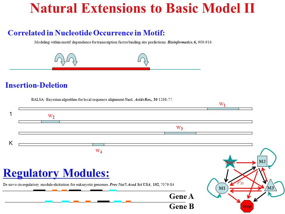 Natural Extensions to Basic Model II Correlated in Nucleotide Occurrence in Motif: Modeling within-motif dependence for transcription factor binding s