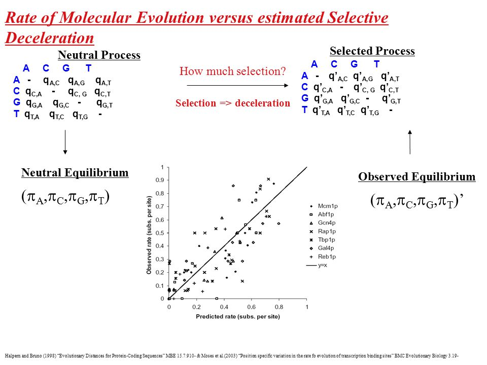 "Rate of Molecular Evolution versus estimated Selective Deceleration Halpern and Bruno (1998) ""Evolutionary Distances for Protein-Coding Sequences"" MBE"
