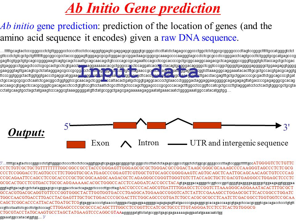 Ab Initio Gene prediction Ab initio gene prediction: prediction of the location of genes (and the amino acid sequence it encodes) given a raw DNA sequ