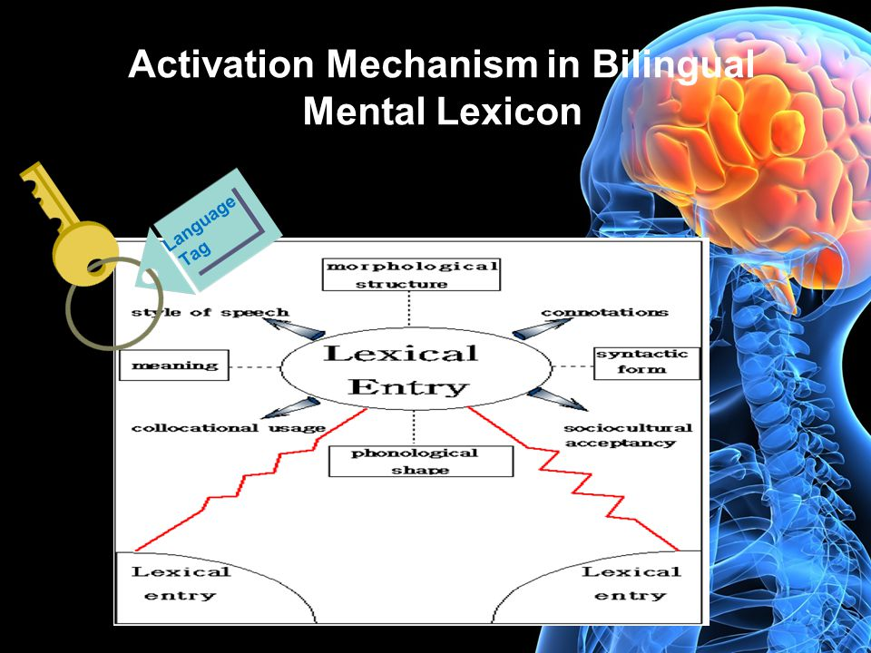 Activation Mechanism in Bilingual Mental Lexicon Language Tag