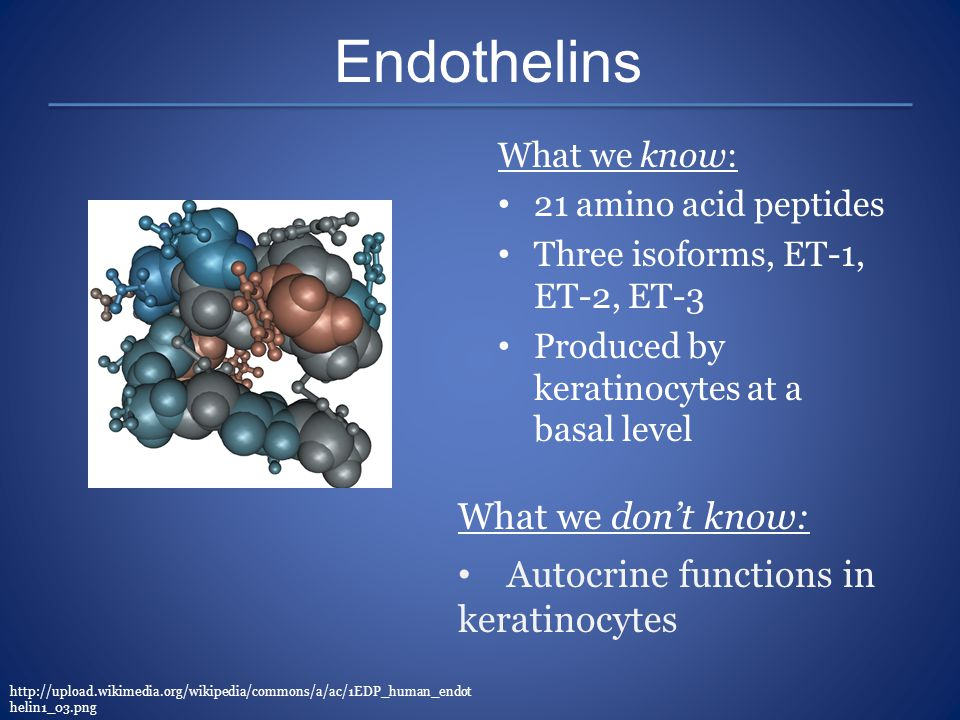 Endothelins What we know: 21 amino acid peptides Three isoforms, ET-1, ET-2, ET-3 Produced by keratinocytes at a basal level http://upload.wikimedia.o