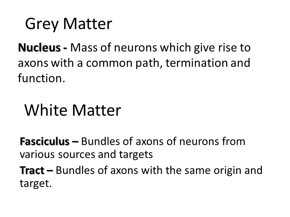 Grey Matter Nucleus - Nucleus - Mass of neurons which give rise to axons with a common path, termination and function. White Matter Fasciculus – Fasci