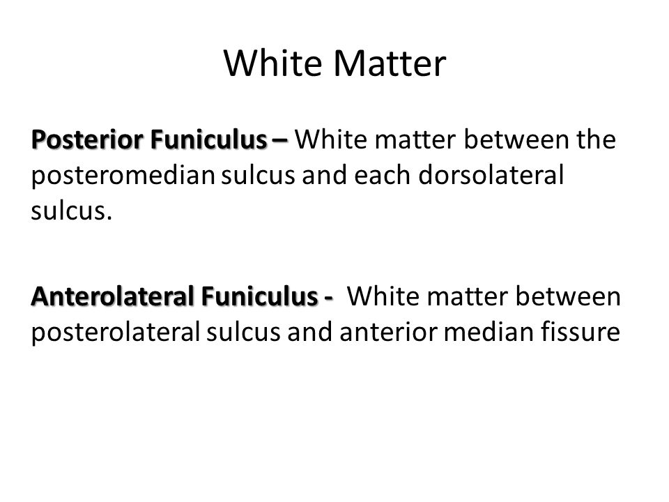 White Matter Posterior Funiculus – Posterior Funiculus – White matter between the posteromedian sulcus and each dorsolateral sulcus. Anterolateral Fun