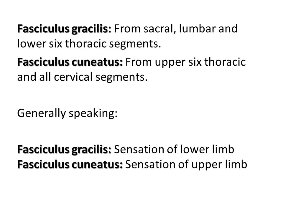 Fasciculus gracilis: Fasciculus gracilis: From sacral, lumbar and lower six thoracic segments. Fasciculus cuneatus: Fasciculus cuneatus: From upper si
