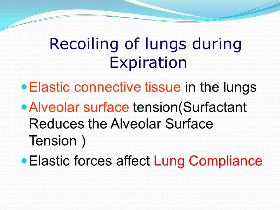 Recoiling of lungs during Expiration Elastic connective tissue in the lungs Alveolar surface tension(Surfactant Reduces the Alveolar Surface Tension )
