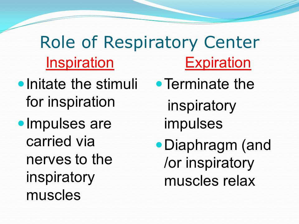 Role of Respiratory Center Inspiration Initate the stimuli for inspiration Impulses are carried via nerves to the inspiratory muscles Expiration Termi