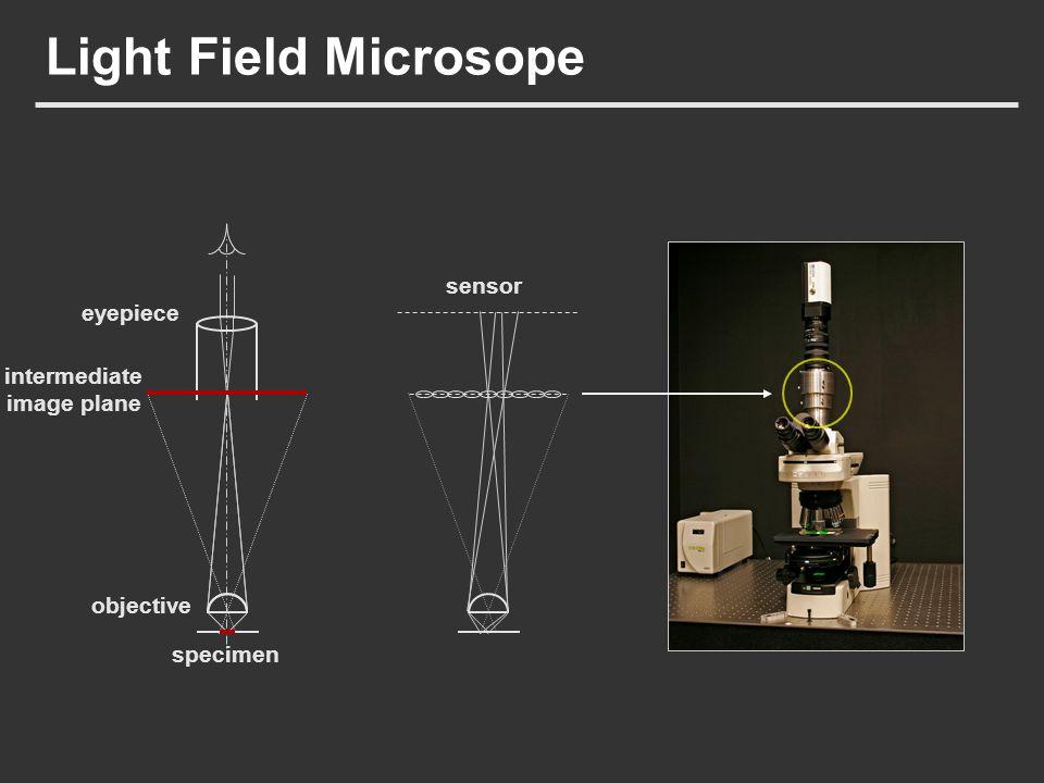 Light Field Microsope objective specimen intermediate image plane eyepiece sensor