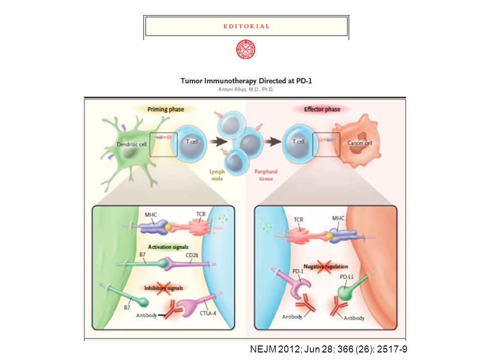 Melanoma responds to T cell infiltration by expressing PD-L1 (adaptive immune resistance)