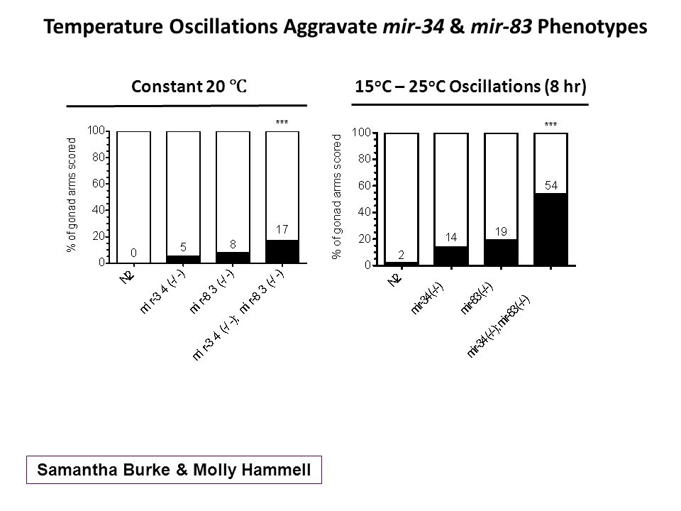 Constant 20 ℃ Temperature Oscillations Aggravate mir-34 & mir-83 Phenotypes 15 o C – 25 o C Oscillations (8 hr) Samantha Burke & Molly Hammell