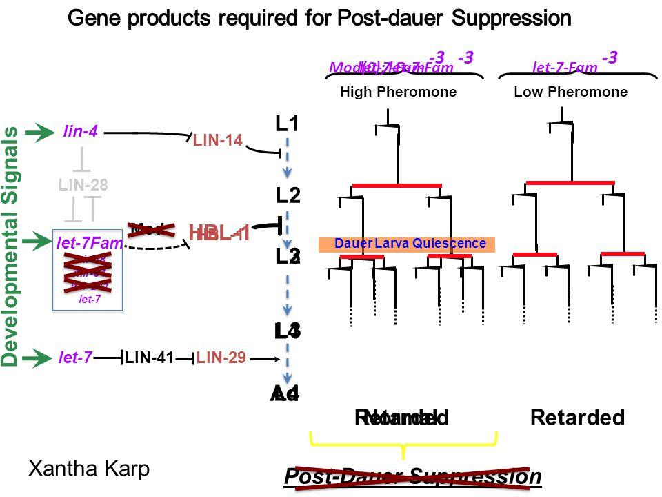 Post-Dauer Suppression LIN-29LIN-41 lin-4 let-7 LIN-14 L1 L2 HBL-1 Normal Retarded Developmental Signals Mod HBL-1 Retarded High Pheromone Low Pheromo