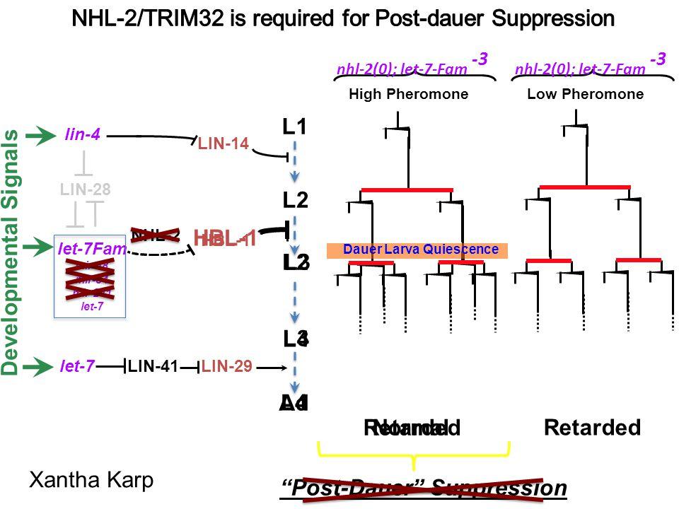 nhl-2(0); let-7-Fam -3 LIN-29LIN-41 lin-4 let-7 LIN-14 L1 L2 HBL-1 Normal Retarded Developmental Signals NHL-2 HBL-1 Retarded High Pheromone Low Phero