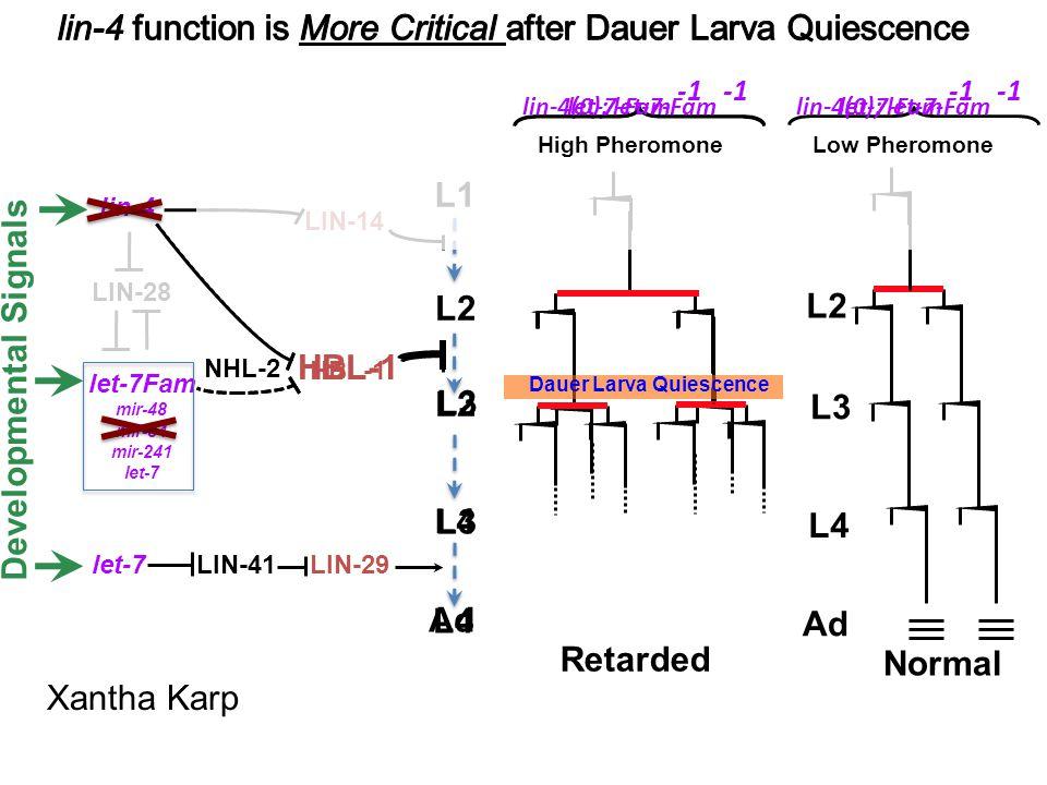 LIN-28 lin-4(0); let-7-Fam -1 LIN-29LIN-41 lin-4 let-7 LIN-14 L1 L2 HBL-1 Developmental Signals NHL-2 HBL-1 Retarded High Pheromone Xantha Karp let-7-