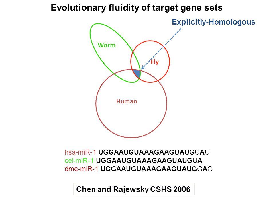 Worm Fly Human hsa-miR-1 UGGAAUGUAAAGAAGUAUGUAU cel-miR-1 UGGAAUGUAAAGAAGUAUGUA dme-miR-1 UGGAAUGUAAAGAAGUAUGGAG Chen and Rajewsky CSHS 2006 Evolution
