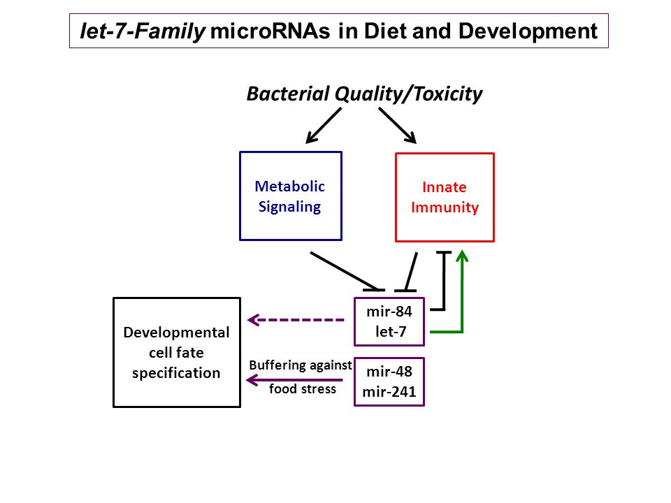 Metabolic Signaling Innate Immunity Bacterial Quality/Toxicity mir-48 mir-241 Buffering against food stress mir-84 let-7 Developmental cell fate specification let-7-Family microRNAs in Diet and Development