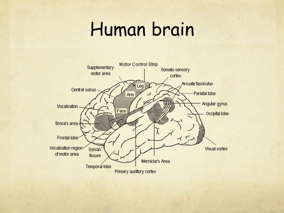 Broca and Wernicke The language parts of the brain are named for two 19 th century physicians, Paul Broca and Carl Wernicke.