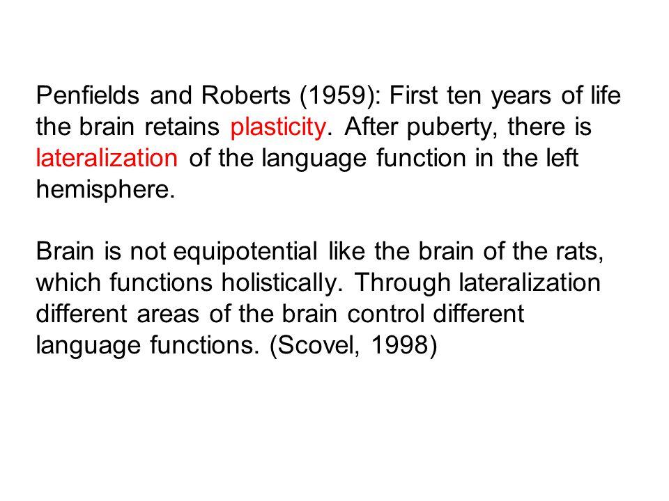 Lateralization Cerebral cortex (gray matter) Motor cortex Sensory cortex Broca´s areaWernicke´s area