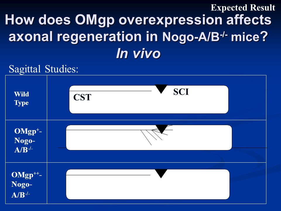 How does OMgp overexpression affects axonal regeneration in Nogo-A/B -/- mice .