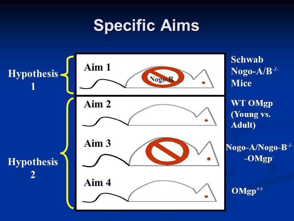 Specific Aims Nogo-B Schwab Nogo-A/B -/- Mice WT OMgp (Young vs.