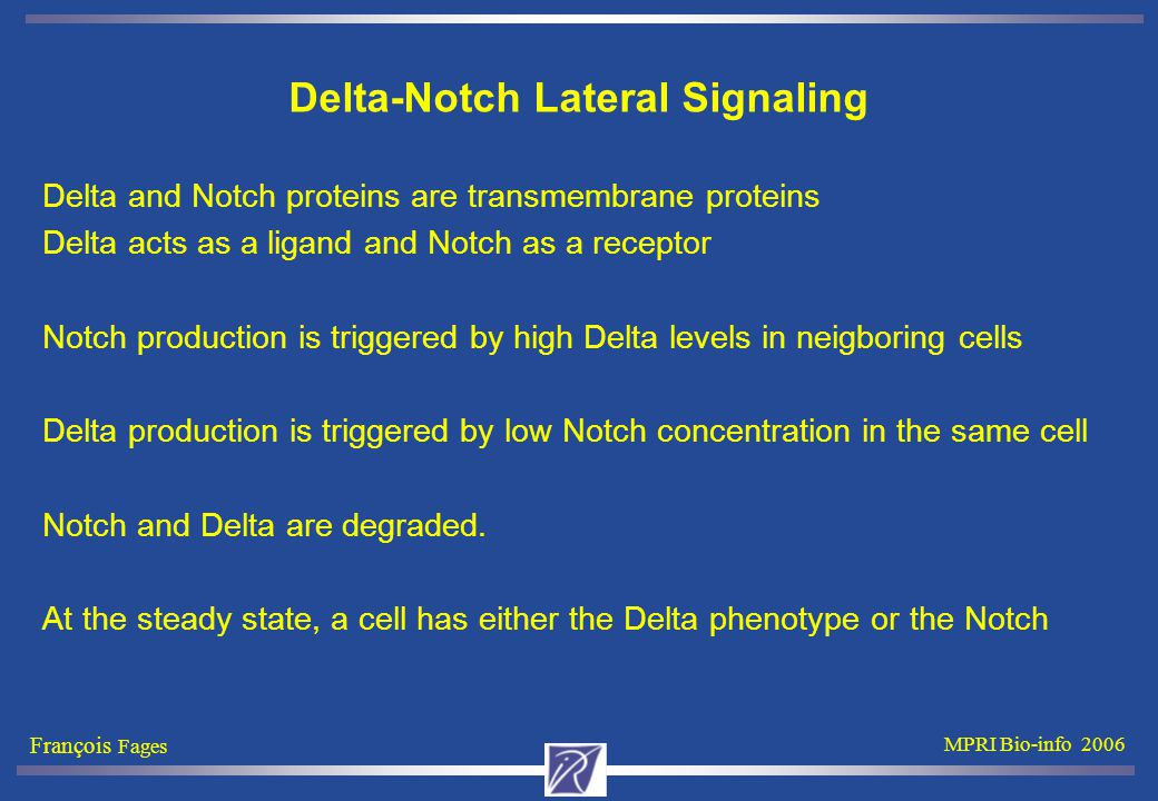 François Fages MPRI Bio-info 2006 Delta-Notch Lateral Signaling Delta and Notch proteins are transmembrane proteins Delta acts as a ligand and Notch as a receptor Notch production is triggered by high Delta levels in neigboring cells Delta production is triggered by low Notch concentration in the same cell Notch and Delta are degraded.