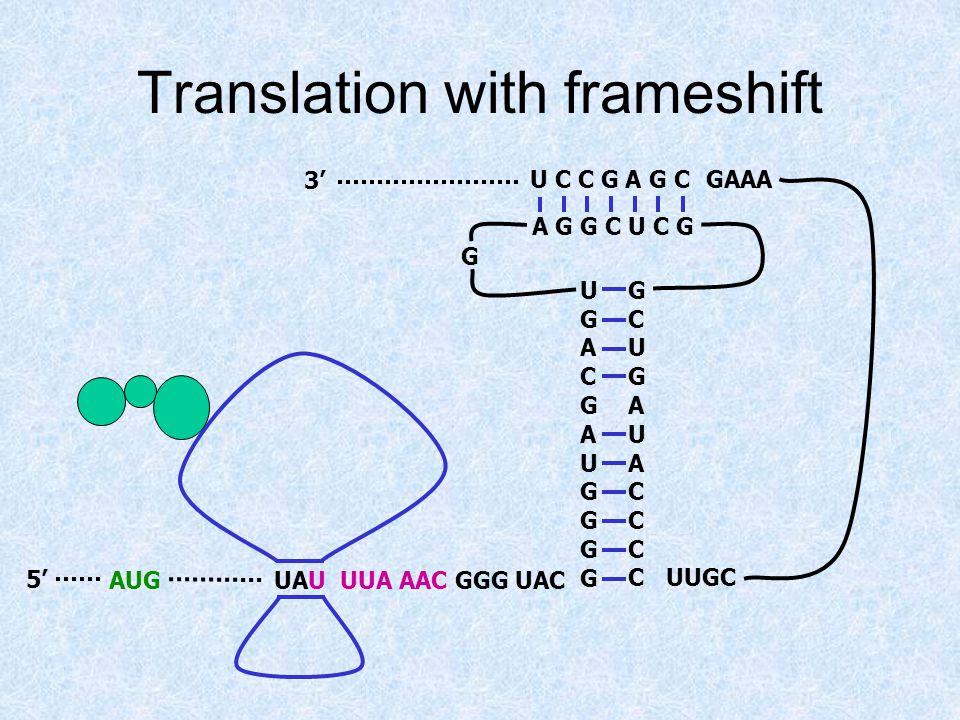 Translation with frameshift UAU UUA AAC GGG UACAUG5' 3' UGACGAUGGGGUGACGAUGGGG GCUGAUACCCCGCUGAUACCCC A G G C U C G U C C G A G C G UUGC GAAA