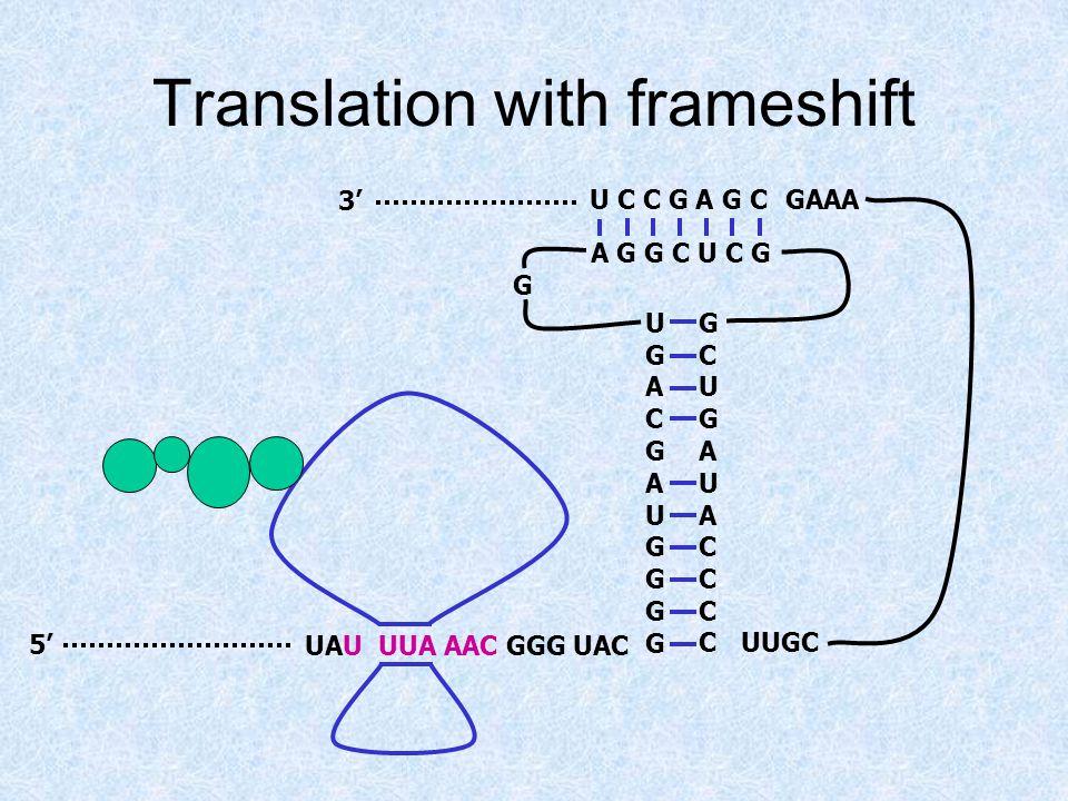 Translation with frameshift UAU UUA AAC GGG UAC5' 3' UGACGAUGGGGUGACGAUGGGG GCUGAUACCCCGCUGAUACCCC A G G C U C G U C C G A G C G UUGC GAAA