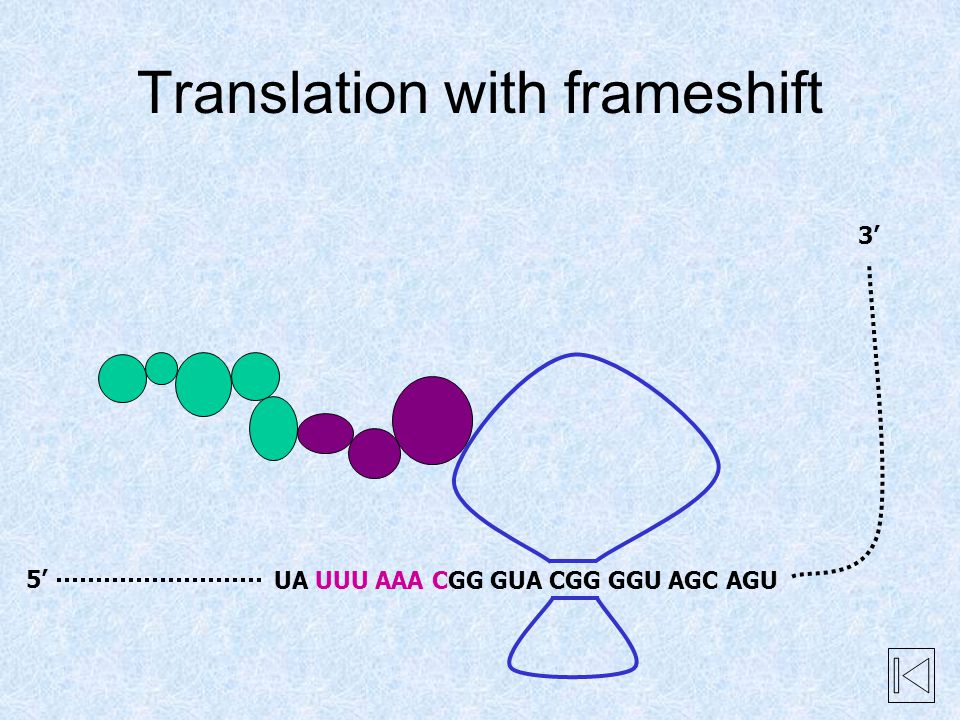 UA UUU AAA CGG GUA CGG GGU AGC AGU Translation with frameshift 5' 3'