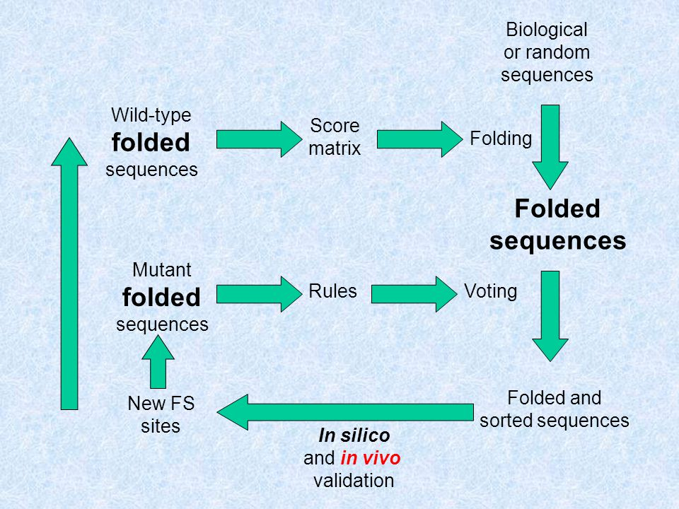 Biological or random sequences Folded sequences In silico and in vivo validation Folding Wild-type folded sequences Folded and sorted sequences New FS sites Mutant folded sequences Score matrix RulesVoting