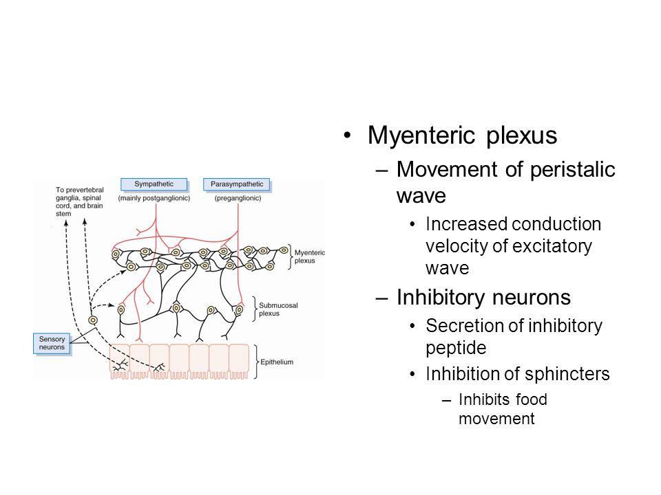 Myenteric plexus –Movement of peristalic wave Increased conduction velocity of excitatory wave –Inhibitory neurons Secretion of inhibitory peptide Inhibition of sphincters –Inhibits food movement