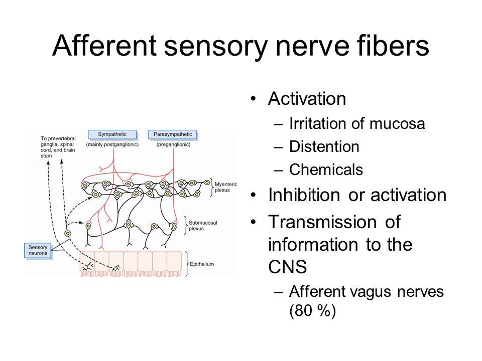 Afferent sensory nerve fibers Activation –Irritation of mucosa –Distention –Chemicals Inhibition or activation Transmission of information to the CNS –Afferent vagus nerves (80 %)