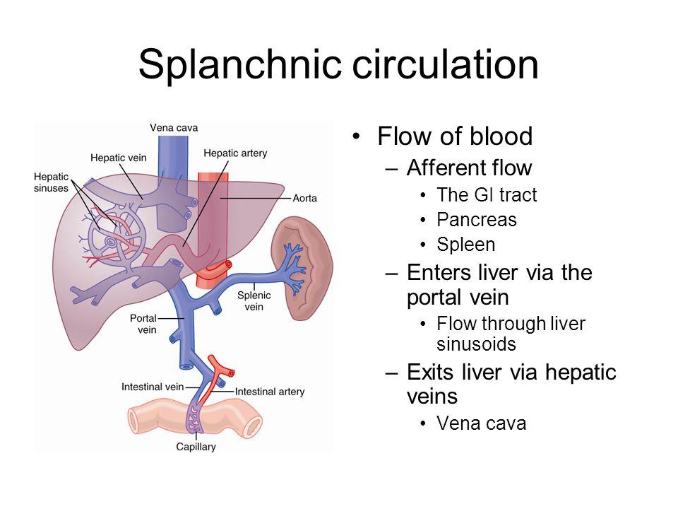 Splanchnic circulation Flow of blood –Afferent flow The GI tract Pancreas Spleen –Enters liver via the portal vein Flow through liver sinusoids –Exits liver via hepatic veins Vena cava