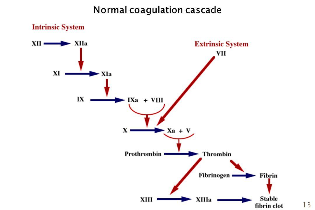 13 Normal coagulation cascade