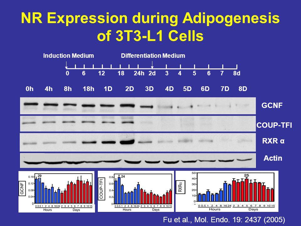 0h 4h 8h 18h 1D 2D 3D 4D 5D 6D 7D 8D Actin COUP-TFI 0 6 12 18 24h 2d 3 4 5 6 7 8d Induction MediumDifferentiation Medium NR Expression during Adipogenesis of 3T3-L1 Cells GCNF Fu et al., Mol.