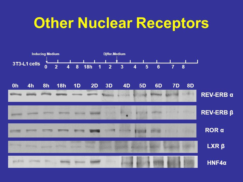 Other Nuclear Receptors 0h 4h 8h 18h 1D 2D 3D 4D 5D 6D 7D 8D 0 2 4 8 18h 1 2 3 4 5 6 7 8 3T3-L1 cells Inducing MediumDjffer.Medium REV-ERB α REV-ERB β ROR α HNF4α LXR β