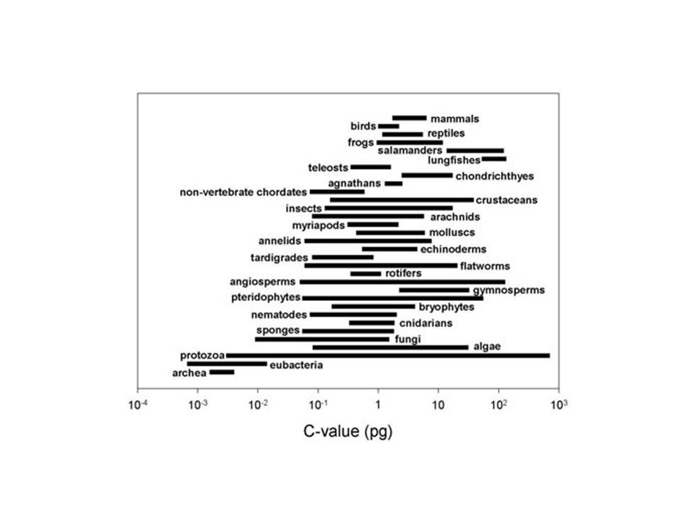 В каком пространстве происходит эволюция ≈10 9 bp http://www.genomesize.com