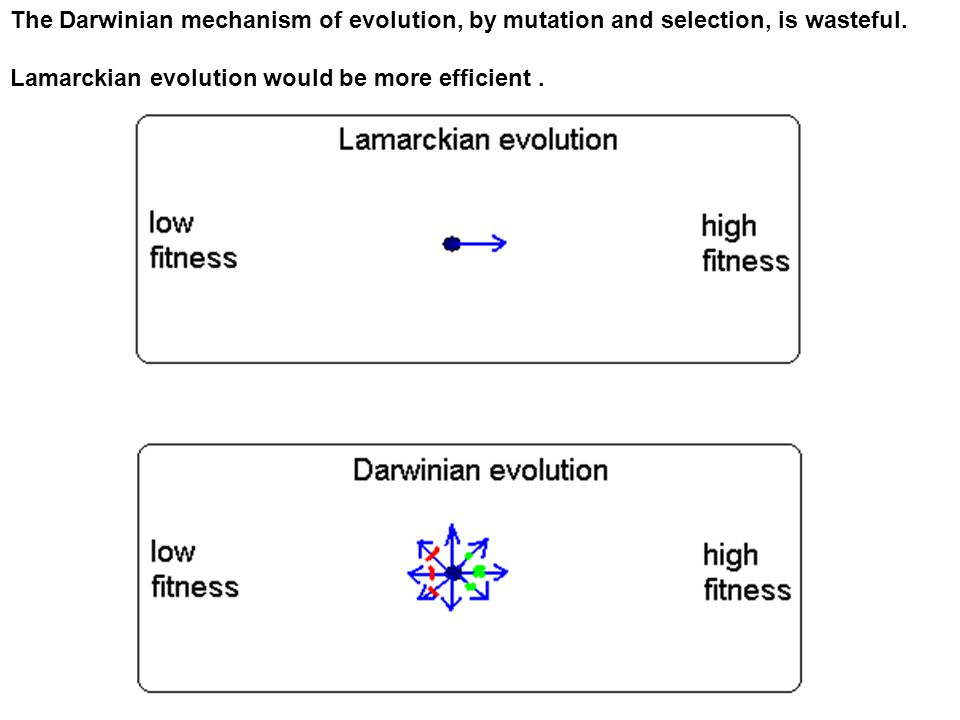 The Darwinian mechanism of evolution, by mutation and selection, is wasteful.
