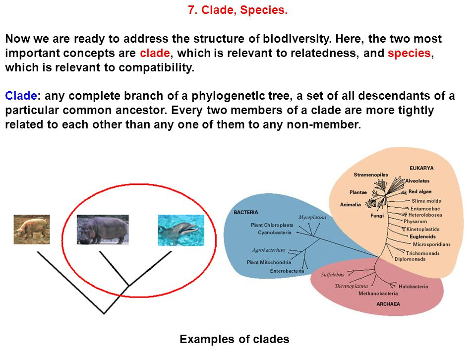 7. Clade, Species. Now we are ready to address the structure of biodiversity.