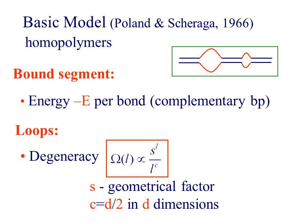 Basic Model (Poland & Scheraga, 1966) Energy –E per bond (complementary bp) Bound segment: homopolymers Loops: Degeneracy s - geometrical factor c=d/2 in d dimensions